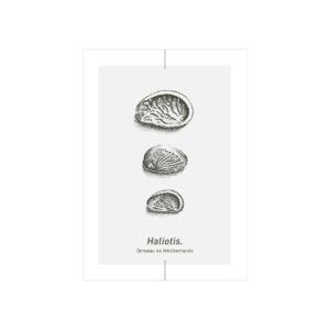 carte postale ormeau méditerranée